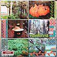 Tofino Rainforest 1